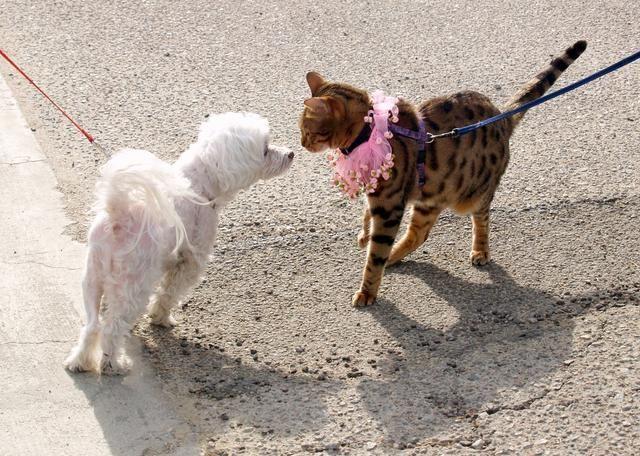 15 años del perro = 76 años humanos. Dogs & Cats pueden aprender a respetarse mutuamente. Enseñe a su perro a ser amable con los demás animales. Todos compartimos un planeta.