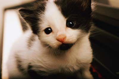 Fotografía - Cómo cuidar a un gato