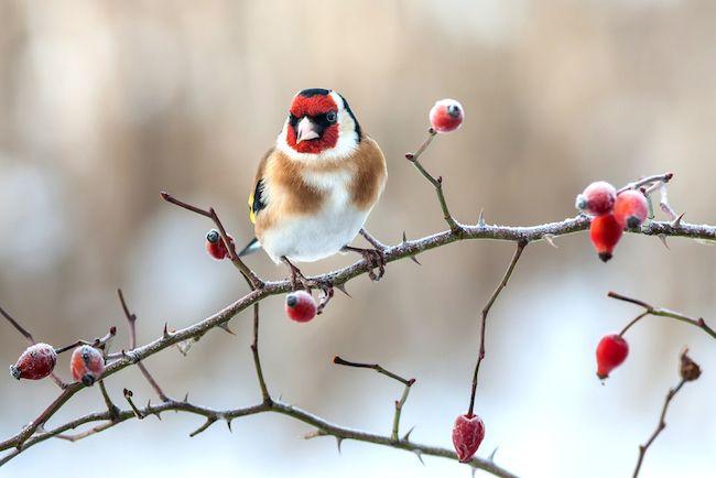 Cómo cuidar a los pájaros del invierno