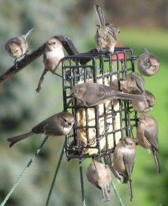 Cómo cuidar a los pájaros del invierno - Alimentador