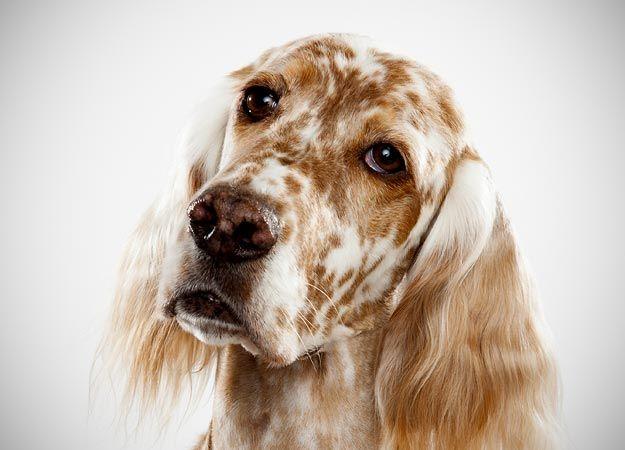 Fotografía - ¿Cómo elegir un perro