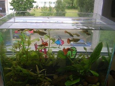 Fotografía - ¿Cómo elegir el equipo del acuario