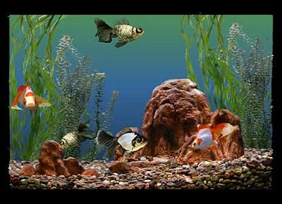 Fotografía - ¿Cómo elegir los peces de acuario