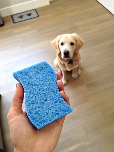 Cómo limpiar y desinfectar la cocina Esponja