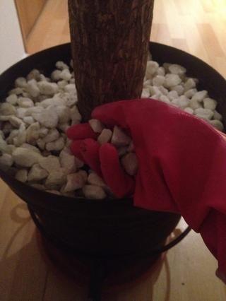 Tome toda su árbol's stones