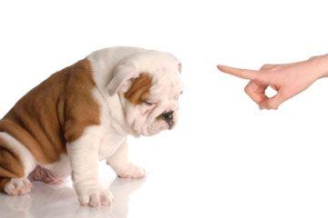 Fotografía - Cómo Clicker-entrenar a un perro