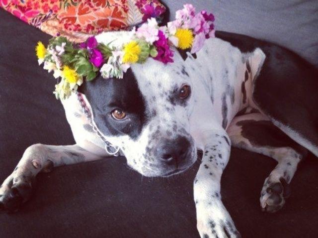 Cómo elaborar una corona floral magnífico