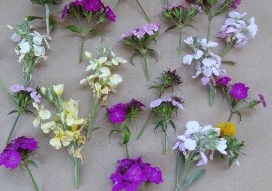 Cortar las flores fuera de sus tallos, dejando por lo menos dos pulgadas de tallo de la flor de usar si el envase.