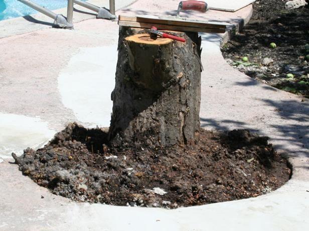 Corte un tronco de árbol a la altura deseada