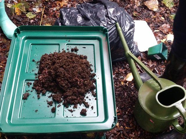 Cómo crear un gusano compostador Apartamento Sized