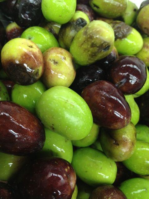 Cómo curar frescas Olivos Receta