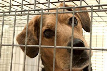 reducir los gastos de mascotas