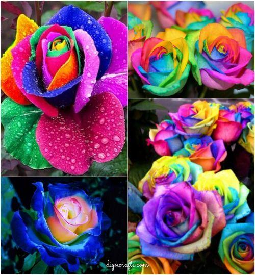 Cómo DIY colorido del arco iris Rosas instrucciones paso a paso de vídeo! Proyecto de bricolaje Único,