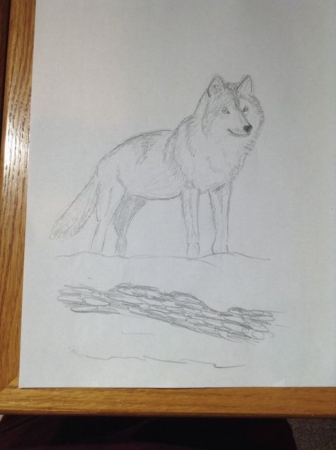 Cómo dibujar un lobo