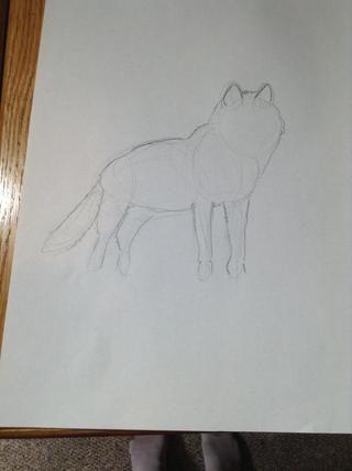 Ahora dibuja el contorno del lobo.