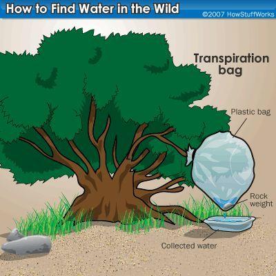 Supervivencia Zona: Alimentación y Agua de la selva