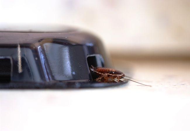 ¿Cómo deshacerse de las cucarachas
