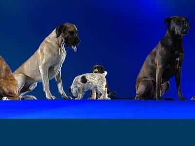 Un perro's Life: Breeds of Dogs