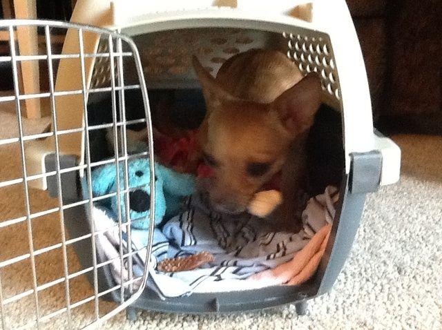 Cómo obtener su perro's Kennel Ready