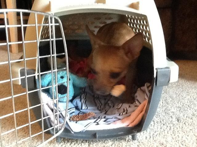 Ahora bien, si usted necesita ir a algún lugar, será fácil de poner a su perro en la perrera! :)