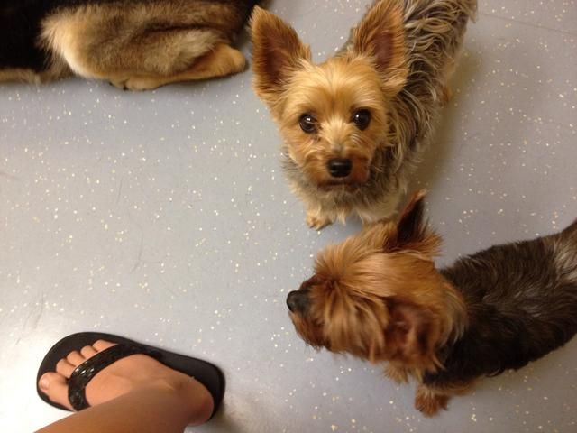 Antes de su veterinario mira a su mascota, y mucho a él / ella se acostumbre a un lugar desconocido.