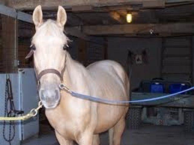 Cómo preparar a un caballo