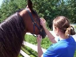 Utilice una esquina del paño húmedo para limpiar cualquier'eye boogers'. Use the other corner to wipe any mucus off the horses nose/nostrils. Don't use the same corner. That's pretty disgusting.