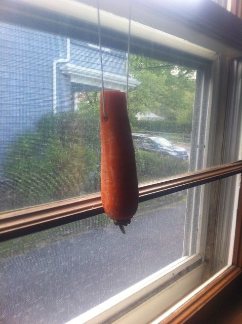 Cómo cultivar una zanahoria al revés