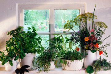 jardín de hierbas de interior