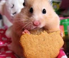 Una cosa que usted necesita para conseguir que se trata. Un regalo puede ser menos azúcar galletas o también puedes conseguir regalos en una tienda de mascotas.