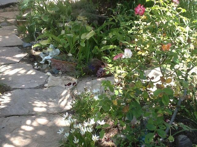 Cómo mantener las malas hierbas del jardín bajo control