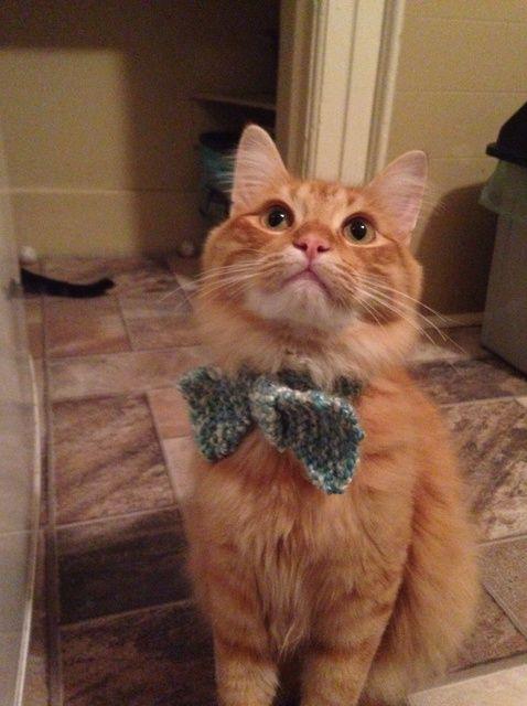 Cómo Tejer un collar de la pajarita para su gato