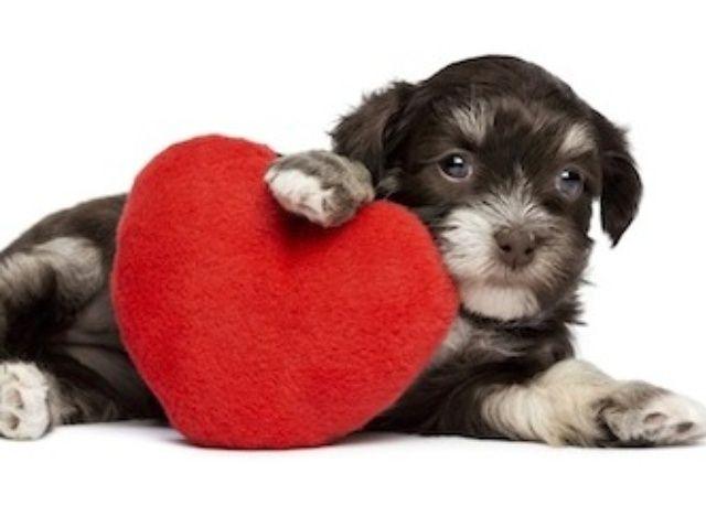 Cómo amar a su perro!