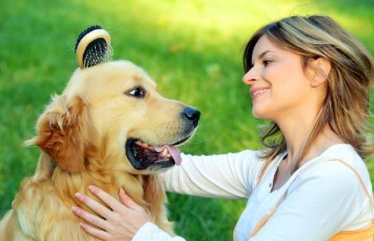 Usted siempre debe cuidar de su perro, también. Cepillarse, caminando, y limpiar después de ellos son muy importantes.
