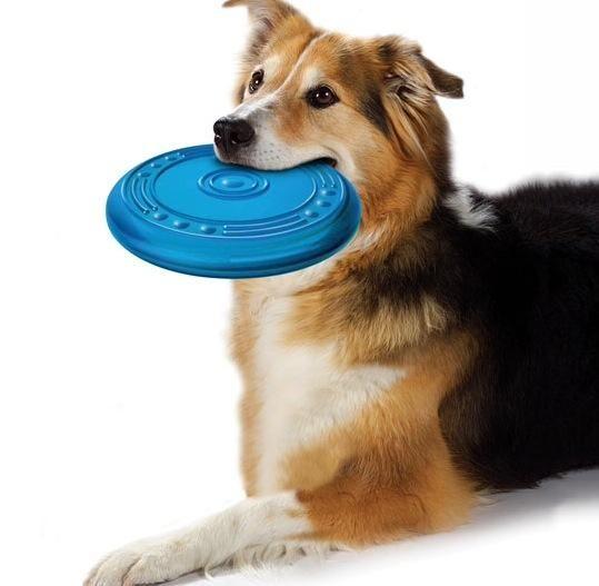 Los perros aman los juguetes, así que asegúrate de que tienes algunos. También, usted debe asegurarse de que sus juguetes son seguros !!