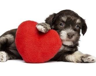 Por encima de todo, debe amar a su perro. Si realmente amas a tu perro, que realmente te encantará, también !!! ?????? ❤️ ??????