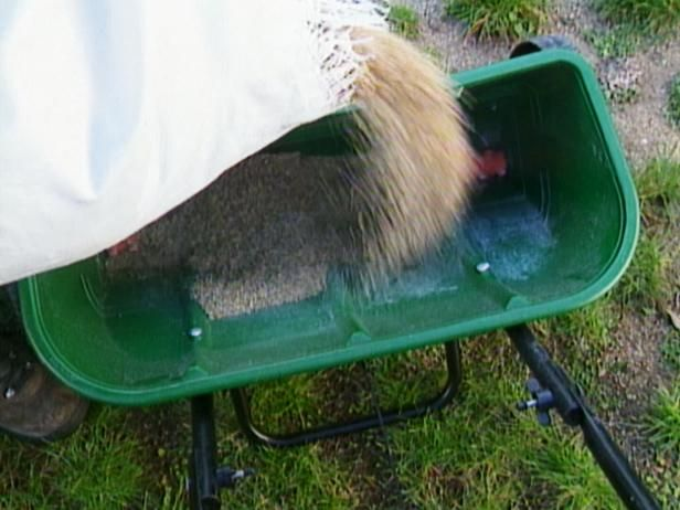Rellene los espacios vacíos con el germen de la hierba