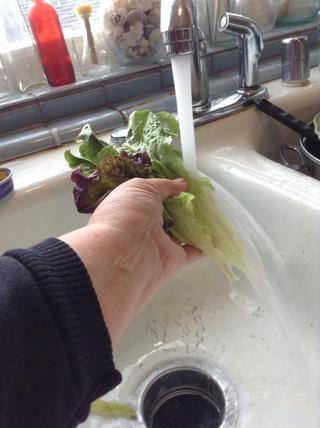 Lávese las ensaladas verdes.
