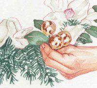 Inserte los racimos de las bolas entre las flores.