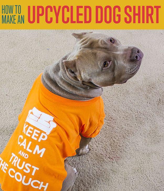 Fotografía - Cómo hacer una camisa de DIY Dog | DIY proyectos favoritos