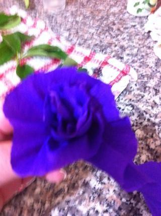 Hacer las flores por plisado y girando el papel. Construir un pequeño tallo en la parte inferior, donde el pegamento es.