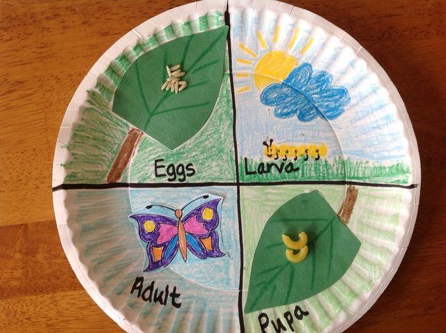 Cómo hacer un modelo de un Ciclo de Vida de la mariposa