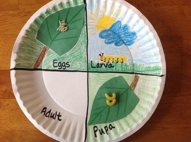 En la sección de pupa, colorear el fondo verde. Pegue la hoja con macarrones en la placa y dibuje un tallo.