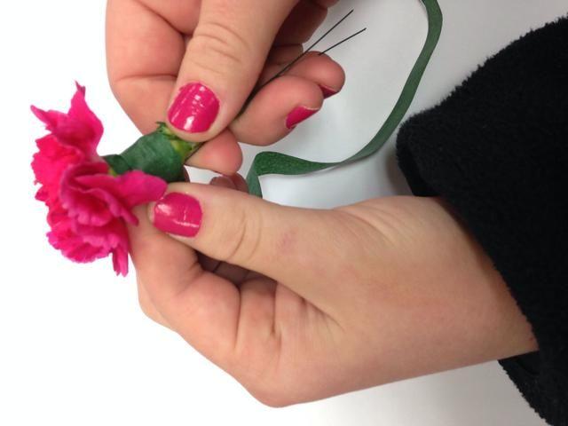 Cinta floral del clavel. Ponga cinta en el pulgar y el dedo índice, tire con fuerza y se mueve hacia abajo del tallo.