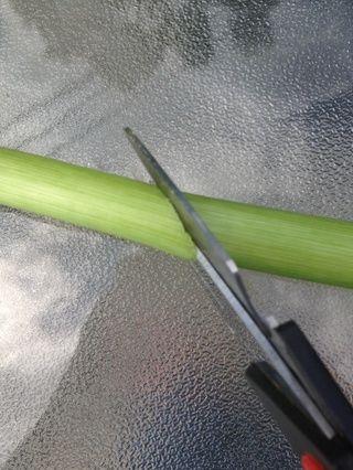 Cortar los tallos en diagonal para absorber agua máximo