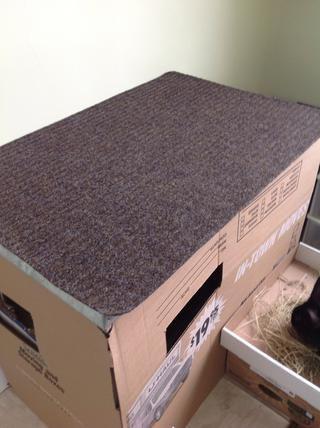 Puse una alfombra en la sartén para mantener Nigel resbale, conejito patas don't like shinny surfaces. :(