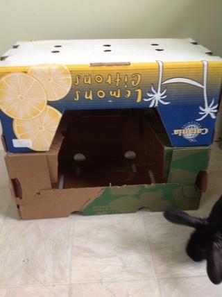 Por su heno (o comedor) me llevé dos cajas y los puse como tal, sostuve el junto con algunas bandas de sujeción.