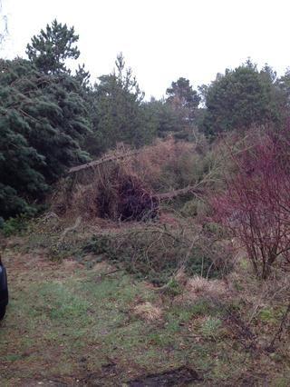 Todos los árboles en nuestra casa de verano se han reducido después de la última semana de tormenta. Muy triste.