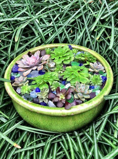 Cómo hacer un jardín suculento plato