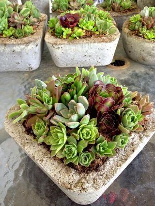Puede completar la pieza central tan fuerte como quieras. Siempre se puede eliminar algunos cortes después de su evento por lo que las plantas tienen espacio para crecer.